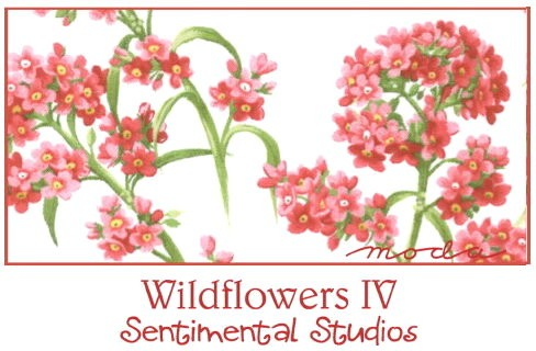 Wildflowers IV