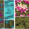 """Water Lilies 5"""" Charm Pack-2966"""