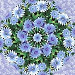 Wildflowers with Snow Blossoms Kaleidoscope Quilt Kit -0