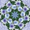 Wildflowers with Snow Blossoms Kaleidoscope Quilt Kit -6547
