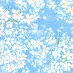 Sakura Park - 32692 13 - Sky-0