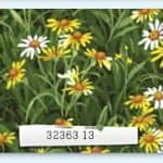 Wildflowers IV - 32363 13-0