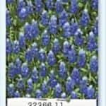 Wildflowers IV - 32366 11-0